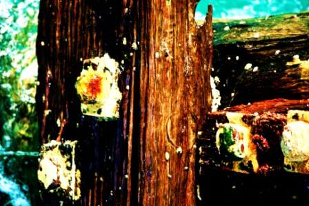 """Abstract Digital Photo Painting No. 60A - Titled """"Queenscliff Point Lonsdale ADAP"""" April 2010 by Abstract Artist: Karen Robinson NB: All images are protected by copyright laws!"""