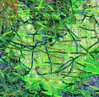 Single Abstract Digital Photo Paintings (6/6)