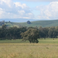 Valley of a Thousand Hills - Strath Creek Region Country Victoria - Aust. 2010 Photo 9 Photographed by Abstract Artist: Karen Robinson NB: All images are protected by copyright laws!