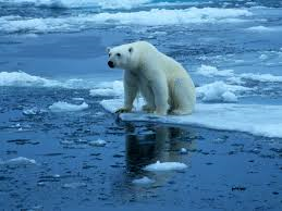 National Geographic. (n.d.) Polar Bear on Ice. [Photo I.D. 28044.jpg]. Retrieved October 19, 2014.png
