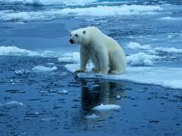 National Geographic. (n.d.) Polar Bear on Ice. [Photo I.D. 28044.jpg]. Retrieved October 19, 2014.png