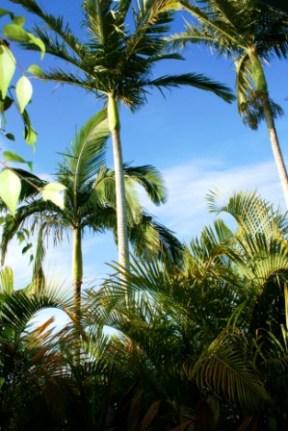 No. 10 - Broadbeach, Gold Coast, Queensland - Australia Photographed by Karen Robinson Abstract Artist 2011.JPG