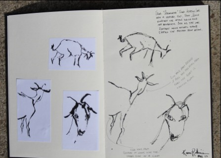 "View No. 2 ""Goat"" - Karen Robinson's ink drawings created in Marco Luccio's arts session on creating powerful & expressive drawings 2015.JPG NB: All images are protected by copyright laws"