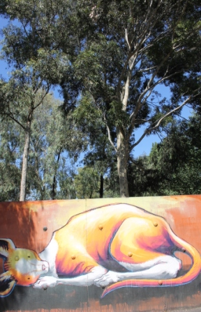 Photo No. 11 of 21 KAFF-EINE Street Artist Work - Melbourne Street Art Fitzroy at Smith Reserve on Alexander Parade - This amazing wondrous creature appears to be representative of a Kangaroo and it almost looks like it is napping under the above Australian Native Gum Trees - Photographed by Karen Robinson.JPG