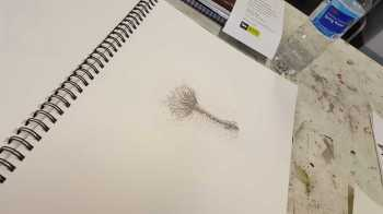 No. 3-19 Second 'Produce Drawings' CAE Class - Certificate 111 in Visual Arts - Photograph taken by Karen Robinson NB All images are protected by copyright laws