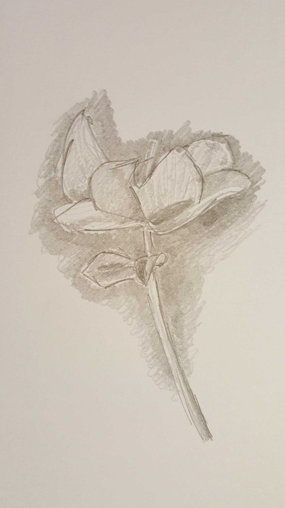 1-3 Visual Diary Drawings at home studio - Drawings & Photographed by Karen Robinson Aug 2016 NB All images are protected by copyright laws