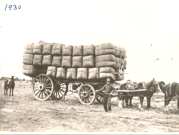Believe to be Karen Robinson's Grand Father standing beside a horse-drawn wagon of Australian Merino Wool bales - heading to be sold at Sydney, NSW's Exchange Wool Sale Rooms 1930_001