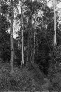 Lerderderg, Victoria - Australia 'Mackenzies Flat Picnic Area - Lerderderg State Forest'_Photographed by ©Karen Robinson_www.idoartkarenrobinson.com - Feb 2017