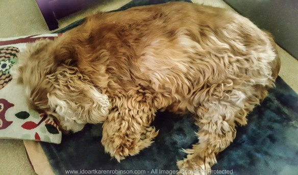 Jessie_Robinson Family Dog_R.I.P. March 2017 Photographed by Karen Robinson_www.idoartkarenrobinson.com_March 2017. NB All images are protected by copyright laws 101.jpg