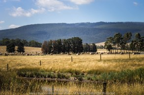 Whittlesea, Victoria - Australia 'Farmlands & Mount Disappointment State Forest Region' Photographed by © Karen Robinson www.idoartkarenrobinson.com March 2017