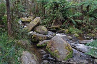 Cardina Shire, Victoria - Australia 'Toorongo Falls Reserve'_Photographed by ©Karen Robinson_www.idoartkarenrobinson.com - April 2017. Comments: My hubby, daughter and I stopped to visit the region of Toorongo Falls where green large ferns are plentiful, and tall gum trees reflect the late afternoon sun off their papery trunks, and the Toorongo River quickly passes by within this heavenly beautiful location.