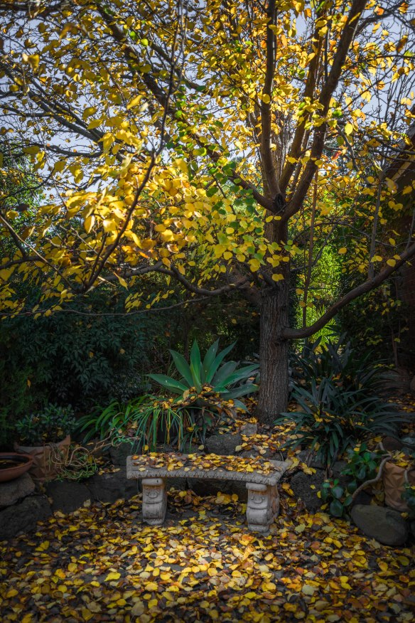 Attwood, Victoria - Australia_Photographed by ©Karen Robinson_www.idoartkarenrobinson.com May 2017. Comments: Beautiful Autumn leaves in front home garden.
