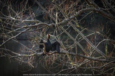 "Daylesford Region, Victoria - Australia ""Jubilee Lake""_ Photographed by ©Karen Robinson www.idoartkarenrobinson.com June 2017. Comments: Husband and I visiting the region to take photographs on this beautiful, fresh winter's day. See an Australian Darter Waterbird."