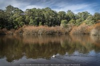 "Daylesford Region, Victoria - Australia ""Jubilee Lake""_ Photographed by ©Karen Robinson www.idoartkarenrobinson.com June 2017. Comments: Husband and I visiting the region to take photographs on this beautiful, fresh winter's day."