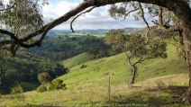 Strath Creek Region, Victoria - Australia_'Valley of a Thousand Hills'_Photographed by ©Karen Robinson_www.idoartkarenrobinson.com May 2017 Comments: Day photographing with my daughter and husband who kindly drove us location to location.