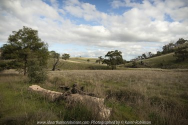 """Wallan Region, Victoria – Australia """"Rural Landscape""""_Photographed by ©Karen Robinson www.idoartkarenrobinson.com July 2017. Comments: Day out with daughter photographing landscape and wildlife on a beautiful winter's day."""