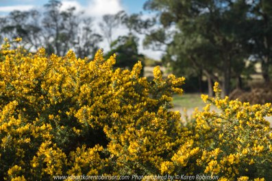 "Wallan Region, Victoria – Australia ""Rural Landscape""_Photographed by ©Karen Robinson www.idoartkarenrobinson.com July 2017. Comments: Day out with daughter photographing landscape and wildlife on a beautiful winter's day."