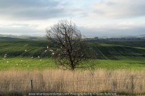 """Wallan Region, Victoria – Australia """"Rural Landscape""""_Photographed by ©Karen Robinson www.idoartkarenrobinson.com July 2017. Comments: Day out with daughter photograping landscape and wildlife on a beautiful winter's day."""