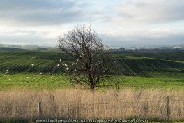 "Wallan Region, Victoria – Australia ""Rural Landscape""_Photographed by ©Karen Robinson www.idoartkarenrobinson.com July 2017. Comments: Day out with daughter photograping landscape and wildlife on a beautiful winter's day."