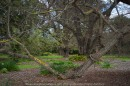 """Elsternwick, Victoria - Australia_Photographed by ©Karen Robinson_ www.idoartkarenrobinson.com September 10, 2017 Comments: My hubby and I with the Craigieburn Camera Club at Rippon Lea House and Gardens. """"It is one of Australia's finest grand suburban estates and the first to achieve National Heritage Listing, recognising its unique significance. The historic mansion is located within a vast pleasure garden of sweeping lawns that cover more than 14 acres and features a windmill, lookout tower, heritage orchard, lake, waterfall, fernery and more!"""" Photograph featuring old tree."""