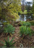 """Elsternwick, Victoria - Australia_Photographed by ©Karen Robinson_ www.idoartkarenrobinson.com September 10, 2017 Comments: My hubby and I with the Craigieburn Camera Club at Rippon Lea House and Gardens. """"It is one of Australia's finest grand suburban estates and the first to achieve National Heritage Listing, recognising its unique significance. The historic mansion is located within a vast pleasure garden of sweeping lawns that cover more than 14 acres and features a windmill, lookout tower, heritage orchard, lake, waterfall, fernery and more!"""" Photograph featuring garden view towards lake."""