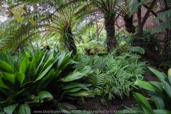 """Elsternwick, Victoria - Australia_Photographed by ©Karen Robinson_ www.idoartkarenrobinson.com September 10, 2017 Comments: My hubby and I with the Craigieburn Camera Club at Rippon Lea House and Gardens. """"It is one of Australia's finest grand suburban estates and the first to achieve National Heritage Listing, recognising its unique significance. The historic mansion is located within a vast pleasure garden of sweeping lawns that cover more than 14 acres and features a windmill, lookout tower, heritage orchard, lake, waterfall, fernery and more!"""" Photograph featuring ferns growing within the fernery."""