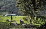 Yan Yean Region, Victoria - Australia_Photographed by ©Karen Robinson www.idoartkarenrobinson.com 2017 Aug 27 Comments: Chilly Winter's day on Ridge Road looking south across the farming region of Yan Yean near and along Deep Creek.