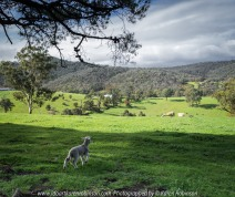 Yan Yean Region, Victoria - Australia_Photographed by ©Karen Robinson www.idoartkarenrobinson.com 2017 Aug 27 Comments: Chilly Winter's day on Ridge Road looking south across the farming region of Yan Yean near and along Deep Creek.