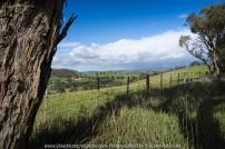 Yan Yean Region, Victoria - Australia_Photographed by ©Karen Robinson www.idoartkarenrobinson.com 2017 Aug 27 Comments: Chilly Winter's day on Ridge Road looking south across the farming region of Yan Yean towards Arthurs Creek.