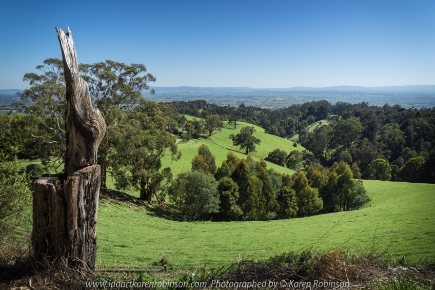 "Seaview Region, Melbourne - Australia ""Grand Ridge Road Region"" Photographed by Karen Robinson NB Copyright Protected_ www.idoartkarenrobinson.com October 17, 2017. NB: Day trip with hubby to visit this beautiful region at its best when all is green before the summer turns it brown."