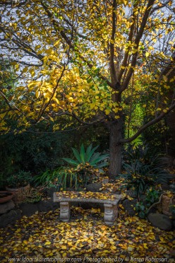 Attwood, Victoria - Australia_Photographed by ©Karen Robinson_www.idoartkarenrobinson.com May 2017. Comments: Beautiful Autumn leaves in front home garden