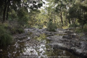 Blackwood, Victoria - Australia 'River Crossing - Lerderderg State Park'_Photographed by ©Karen Robinson_www.idoartkarenrobinson.com_February 2017 #Australian Bush #Australian Gum Trees #Blackwood #Gum Tree Trunks #Gum Trees #Landscape #Lerderderg River #Lerderderg State Park #River Crossing #River Rocks #Streams #Photography