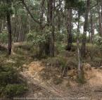 Blackwood, Victoria - Australia 'Shaws Lake - Lerderderg'_Photographed by Karen Robinson_www.idoartkarenrobinson.com_Feb 2017