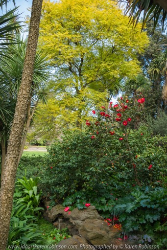 """Elsternwick, Victoria - Australia_Photographed by ©Karen Robinson_ www.idoartkarenrobinson.com_September 10, 2017 Comments: My hubby and I with the Craigieburn Camera Club at Rippon Lea House and Gardens. """"It is one of Australia's finest grand suburban estates and the first to achieve National Heritage Listing, recognising its unique significance. The historic mansion is located within a vast pleasure garden of sweeping lawns that cover more than 14 acres and features a windmill, lookout tower, heritage orchard, lake, waterfall, fernery and more!"""" Photograph featuring Camellia Japonica flowers in bloom."""