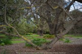 """Elsternwick, Victoria - Australia_Photographed by ©Karen Robinson_ www.idoartkarenrobinson.com_September 10, 2017 Comments: My hubby and I with the Craigieburn Camera Club at Rippon Lea House and Gardens. """"It is one of Australia's finest grand suburban estates and the first to achieve National Heritage Listing, recognising its unique significance. The historic mansion is located within a vast pleasure garden of sweeping lawns that cover more than 14 acres and features a windmill, lookout tower, heritage orchard, lake, waterfall, fernery and more!"""" Photograph featuring old tree."""