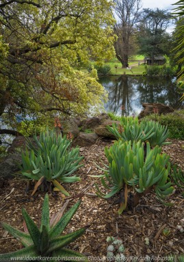 """Elsternwick, Victoria - Australia_Photographed by ©Karen Robinson_ www.idoartkarenrobinson.com_September 10, 2017 Comments: My hubby and I with the Craigieburn Camera Club at Rippon Lea House and Gardens. """"It is one of Australia's finest grand suburban estates and the first to achieve National Heritage Listing, recognising its unique significance. The historic mansion is located within a vast pleasure garden of sweeping lawns that cover more than 14 acres and features a windmill, lookout tower, heritage orchard, lake, waterfall, fernery and more!"""" Photograph featuring garden view towards lake."""