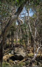 GGooram, Victoria - Australia 'Seven Creeks Wildlife Reserve' Photographed by Karen Robinson Dec 2017 www.idoartkarenrobinson.com NB. All images are protected by copyright laws. Comments: We stopped for lunch amongst the tranquil surroundings of the Seven Creeks and view the Gooram Falls. Featured here - Australian gum leaves, a favourite food for Koalas.