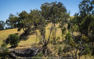 Gooram, Victoria - Australia 'Seven Creeks Wildlife Reserve' Photographed by Karen Robinson Dec 2017 www.idoartkarenrobinson.com NB. All images are protected by copyright laws. Comments: We stopped for lunch amongst the tranquil surroundings of the Seven Creeks and view the Gooram Falls.s.