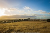 Mickleham - Farmland - photographed by ©Karen Robinson www.idoartkarenrobinson.com Jan 2017.