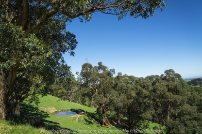 """Seaview Region, Melbourne - Australia """"Grand Ridge Road Region"""" Photographed by Karen Robinson NB Copyright Protected_ www.idoartkarenrobinson.com October 17, 2017. NB: Day trip with hubby to visit this beautiful region at its best when all is green before the summer turns it brown."""