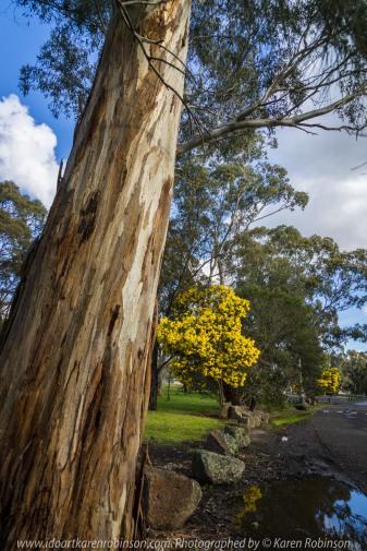 Yan Yean Region, Victoria - Australia_Photographed by ©Karen Robinson_www.idoartkarenrobinson.com 2017 Aug 27 Comments: Chilly Winter's day just off Ridge Road at Yan Yean Top Lookout - Yan Yean Reservoir Park.