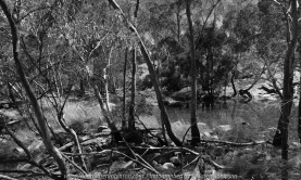 Gooram, Victoria - Australia 'Seven Creeks Wildlife Reserve' Photographed by Karen Robinson Dec 2017 www.idoartkarenrobinson.com NB. All images are protected by copyright laws. Comments: We stopped for lunch amongst the tranquil surroundings of the Seven Creeks and view the Gooram Falls. Featuring this bush scene in black and white, helps to show how unruly it can be!