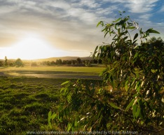 Beveridge, Victoria - Australia 'Golf Course' Photographed by Karen Robinson April 2018 NB. All images are protected by copyright laws. Comments - Sunset at the golden hour and blue hour looking across the golf course towards the mountains in the background