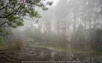 Hesket, Victoria - Australia 'Sanatorium Lake' Photographed by Karen Robinson May 2018 NB. All images are protected by copyright laws. Comments: An afternoon drive to see this man-made lake, famous for its intense reflections and during the 19th century, the cool climate of the Macedon region was thought to provided a perfect environment for patients suffering tuberculosis. A very cool afternoon, where fine mist filtered through the lush green vegetation creating a mystical atmosphere.