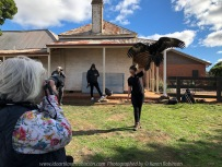 Miners Rest, Victoria - Australia 'Full Flight Birds of Prey' Photographed by Karen Robinson April 2018 NB. All images are protected by copyright laws. Comments - A day with the Craigieburn Camera Club Photography members - visiting and photographing amazing flight displays with stunning Australian raptors and owls - Karen Robinson Photographing at Wedged Tailed Eagle