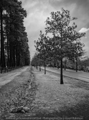 Mount Macedon - Victoria - Australia 'Rainy Day Photography' Photographed by Karen Robinson May 2018 NB. All images are protected by copyright laws Comments - It was a rainy, misty autumn day where taking photographs was a real challenge!