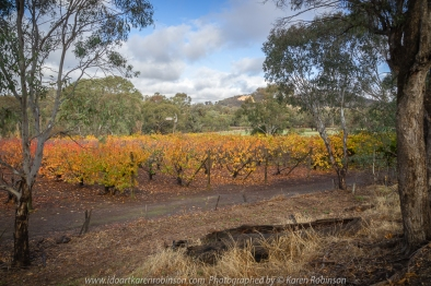 Glenrowan, Victoria - Australia 'Local Region' Photographed by Karen Robinson June 2018 NB. All images are protected by copyright laws Comments - Hubby and I spotted a number of beautiful scenic spots within this region. On the tail end of Autumn, Cherry trees at Smith's Orchard and Grapevines displayed glorious brightly coloured leaves. Local farming landscape scenes hidden away from the mainstream roads revealed countryside enjoyed by local farmers.