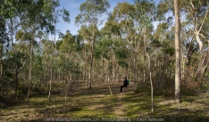 Greenvale, Victoria - Australia 'Woodlands Historic Park' Photographed by Karen Robinson June 2018 NB. All images are protected by copyright laws. Comments - A beautiful day at this historic park which is located just a short distance from home. With other members of the Craigieburn Camera Club, we engaged in a 'free format photograph shot' where we wandered around this nature preserve taking photographs that were of interest to the individual photographer.