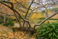 NB. All images are protected by copyright laws. Comments - A grey, cold Autumn day spent photographing these beautiful, picturesque gardens consisting of 7.5 acres of lush grounds, a whimsical playground, lakes, geese and fountains with hubby.