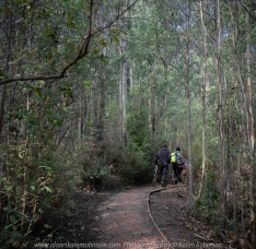 Kinglake West, Victoria - Australia 'Masons Falls' Photographed by Karen Robinson August 2018 NB. All images are copyright protected Comments - A beautiful winter's day walking around this nature reserve and enjoying the company of my daughter, granddaughter and husband!